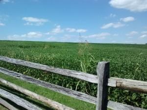 So Peaceful Now - Blue Sky Over Antietam Battlefield